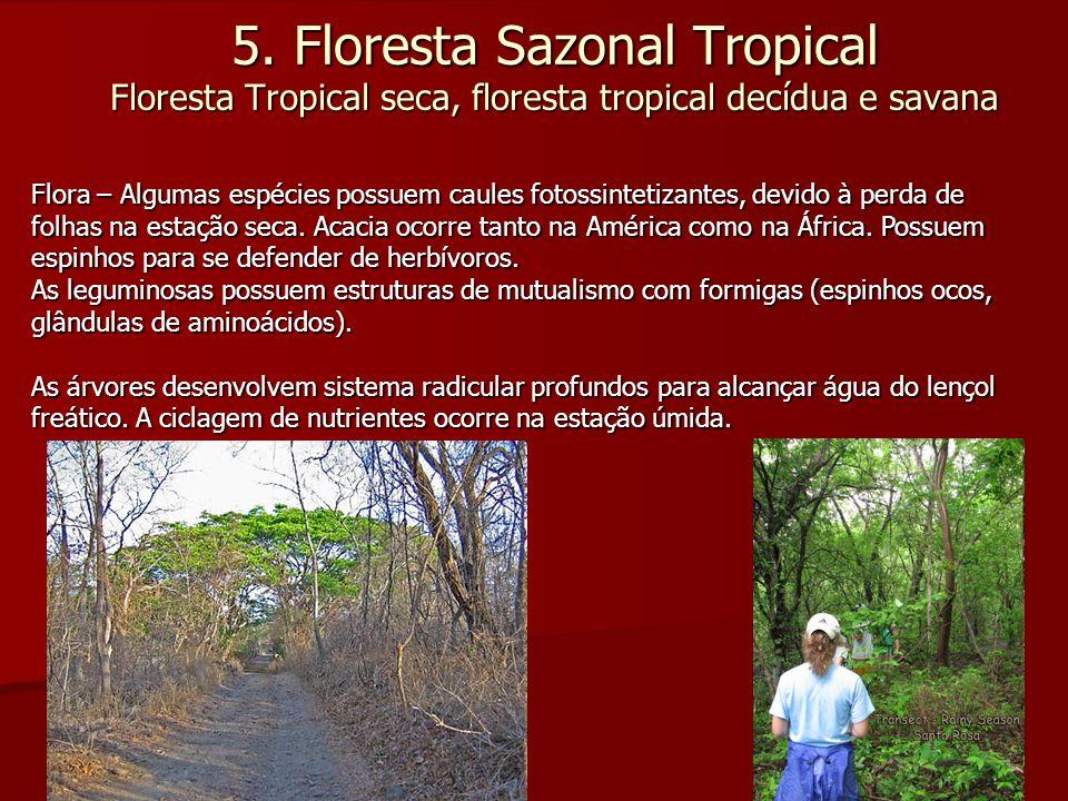5. Floresta Sazonal Tropical Floresta Tropical seca, floresta tropical decídua e savana Flora – Algumas espécies possuem caules fotossintetizantes, de