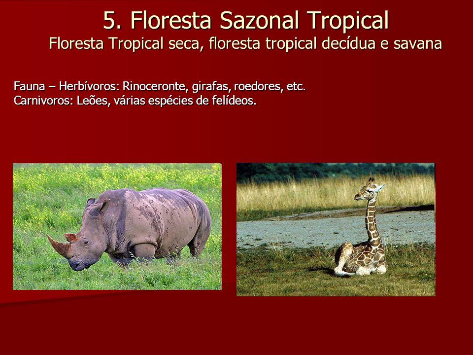 5. Floresta Sazonal Tropical Floresta Tropical seca, floresta tropical decídua e savana Fauna – Herbívoros: Rinoceronte, girafas, roedores, etc. Carni