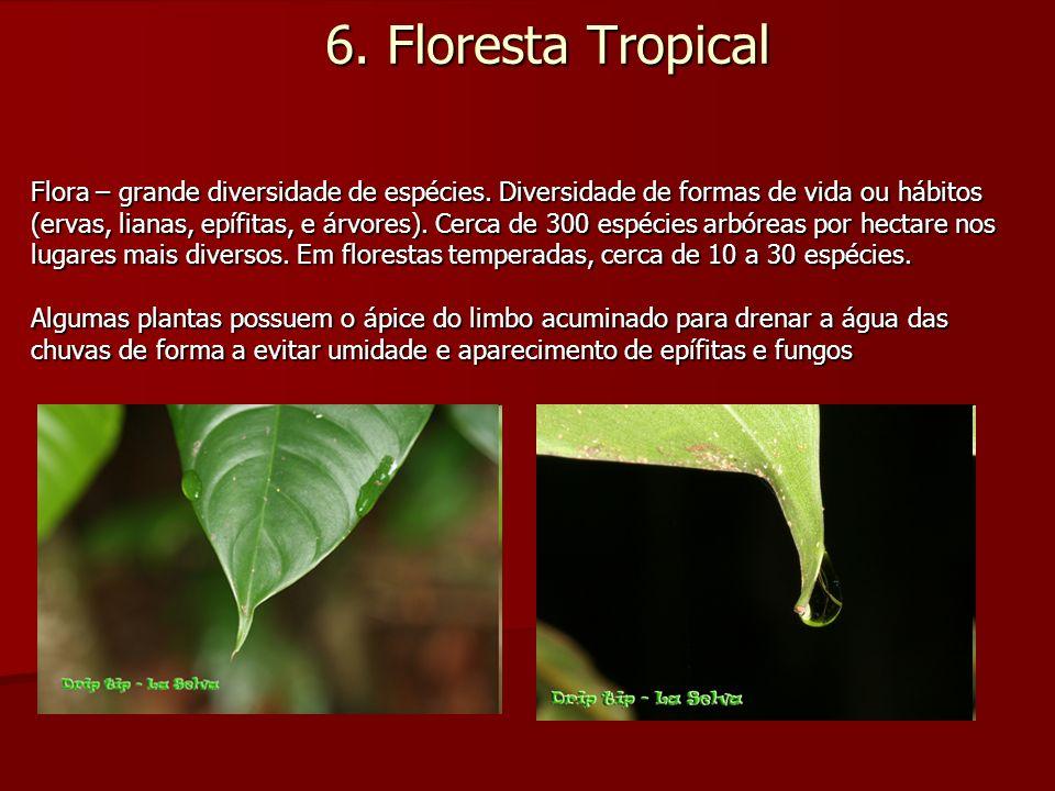 6. Floresta Tropical Flora – grande diversidade de espécies. Diversidade de formas de vida ou hábitos (ervas, lianas, epífitas, e árvores). Cerca de 3
