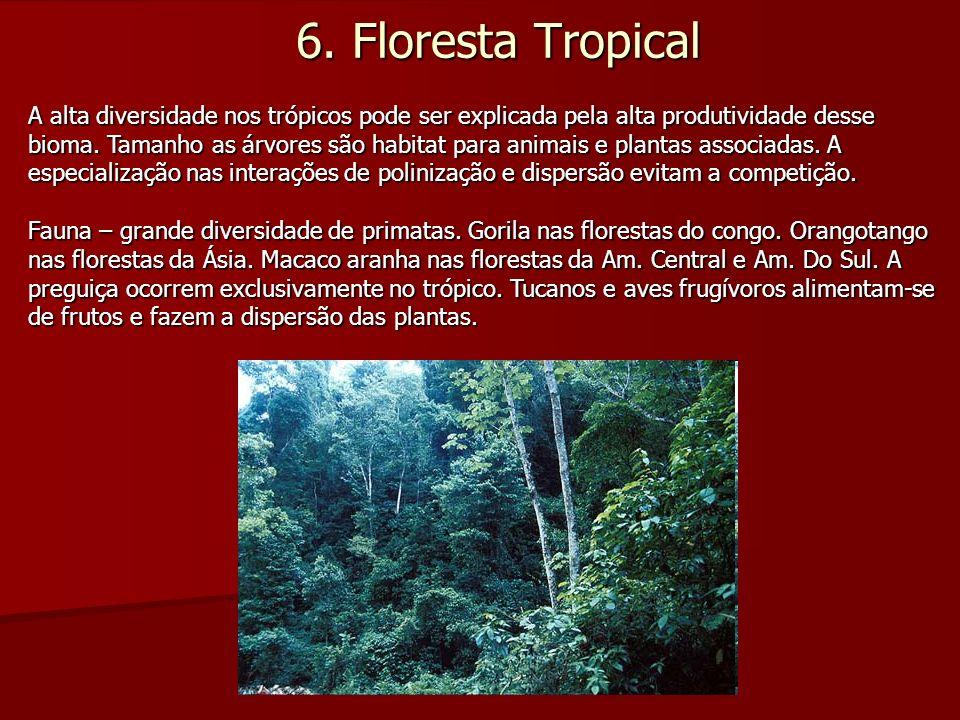 6. Floresta Tropical A alta diversidade nos trópicos pode ser explicada pela alta produtividade desse bioma. Tamanho as árvores são habitat para anima