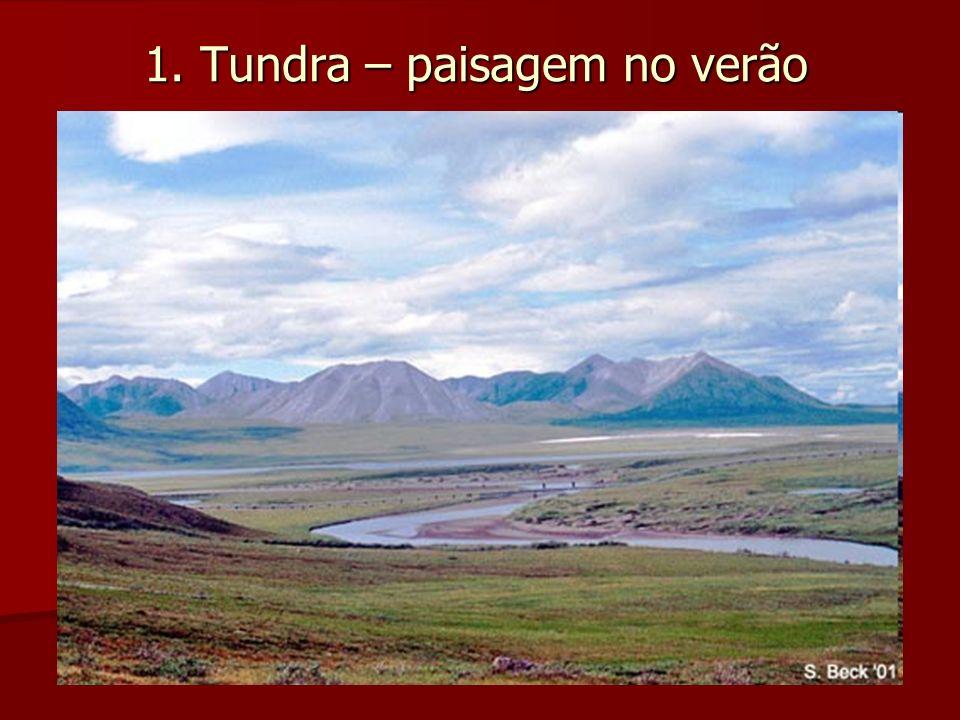 1.Tundra - Distribuição Geográfica - Restrita ao hemisfério norte.