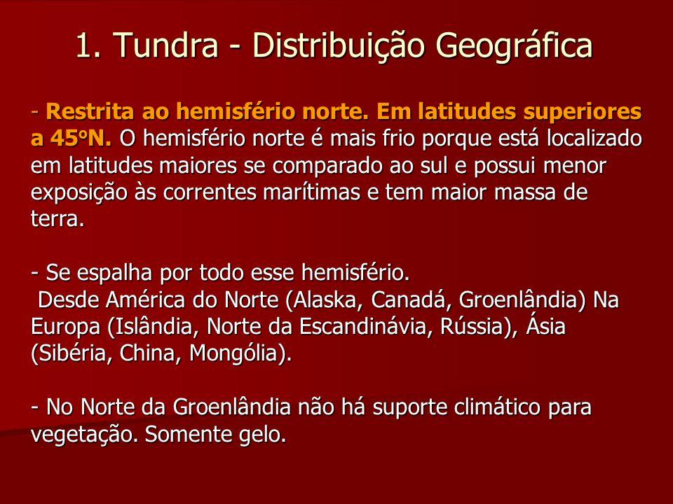 1. Tundra - Distribuição Geográfica - Restrita ao hemisfério norte. Em latitudes superiores a 45 o N. O hemisfério norte é mais frio porque está local