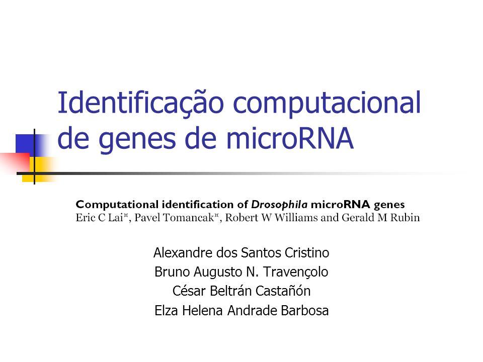 Predição computacional de miRNA de Drosophila Resultado do Alinhamento Conservação total (3/24) diverge no loop (10/24) Divergência no loop divergência em um braço (10/24) Divergência nos braços (0/24) Divergência em um braço (0/24) Divergência no braço >> divergência no loop (1/24)