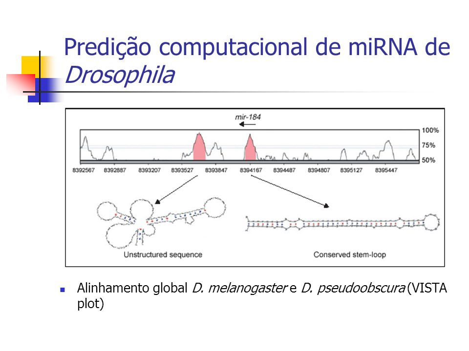 Predição computacional de miRNA de Drosophila Alinhamento global D. melanogaster e D. pseudoobscura (VISTA plot)