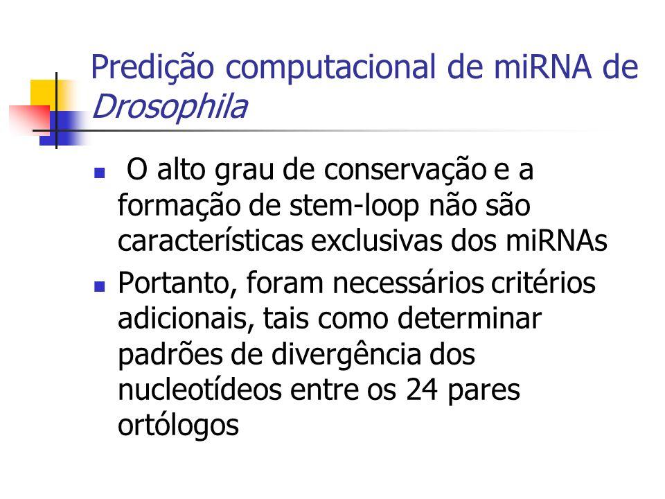 Predição computacional de miRNA de Drosophila O alto grau de conservação e a formação de stem-loop não são características exclusivas dos miRNAs Portanto, foram necessários critérios adicionais, tais como determinar padrões de divergência dos nucleotídeos entre os 24 pares ortólogos