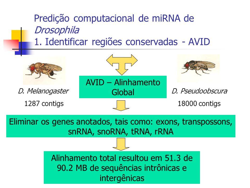 Predição computacional de miRNA de Drosophila 1. Identificar regiões conservadas - AVID D. Melanogaster 1287 contigs D. Pseudoobscura 18000 contigs AV