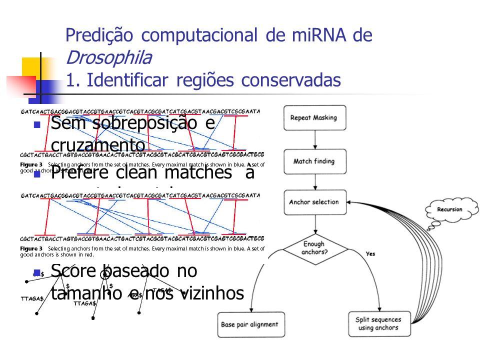 Predição computacional de miRNA de Drosophila 1. Identificar regiões conservadas Sem sobreposição e cruzamento Prefere clean matches à repeated matche