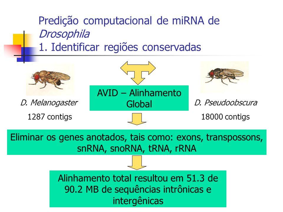 Predição computacional de miRNA de Drosophila 1. Identificar regiões conservadas D. Melanogaster 1287 contigs D. Pseudoobscura 18000 contigs AVID – Al
