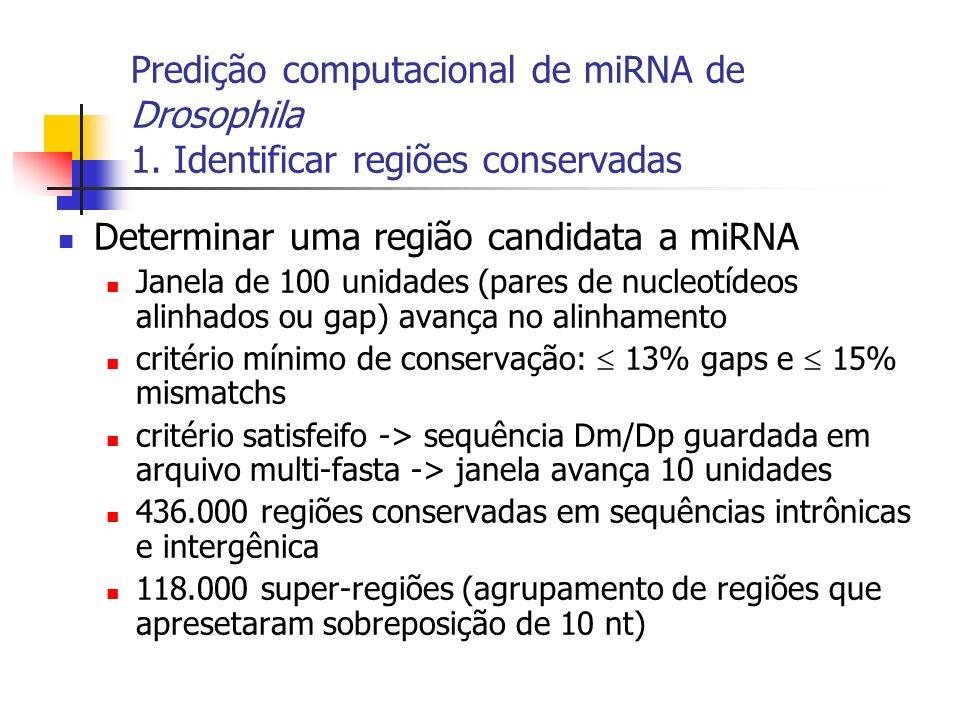 Predição computacional de miRNA de Drosophila 1. Identificar regiões conservadas Determinar uma região candidata a miRNA Janela de 100 unidades (pares