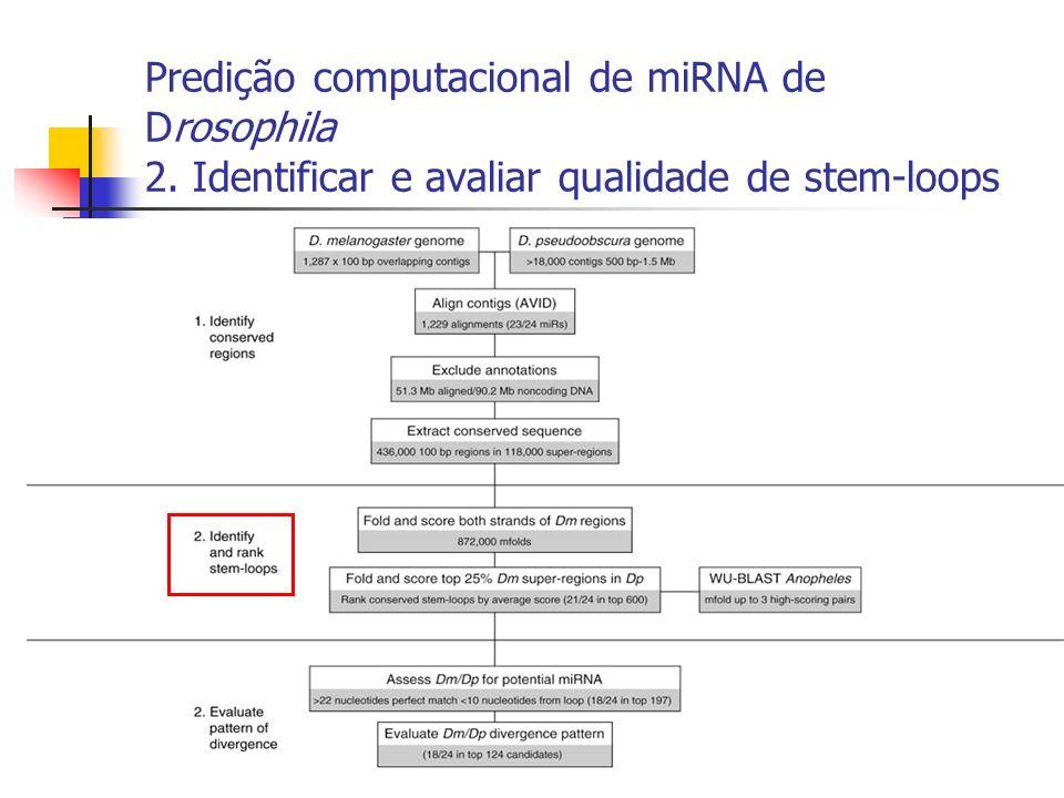 Predição computacional de miRNA de Drosophila 2. Identificar e avaliar qualidade de stem-loops