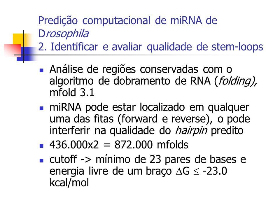 Análise de regiões conservadas com o algoritmo de dobramento de RNA (folding), mfold 3.1 miRNA pode estar localizado em qualquer uma das fitas (forward e reverse), o pode interferir na qualidade do hairpin predito 436.000x2 = 872.000 mfolds cutoff -> mínimo de 23 pares de bases e energia livre de um braço G -23.0 kcal/mol