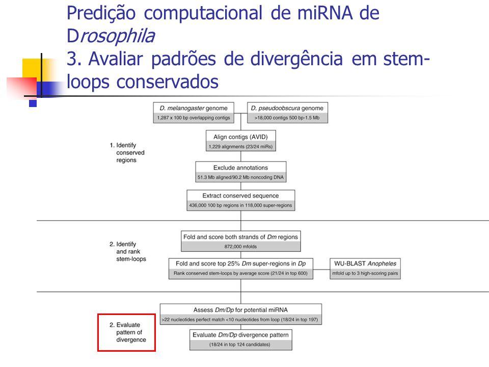 Predição computacional de miRNA de Drosophila 3. Avaliar padrões de divergência em stem- loops conservados