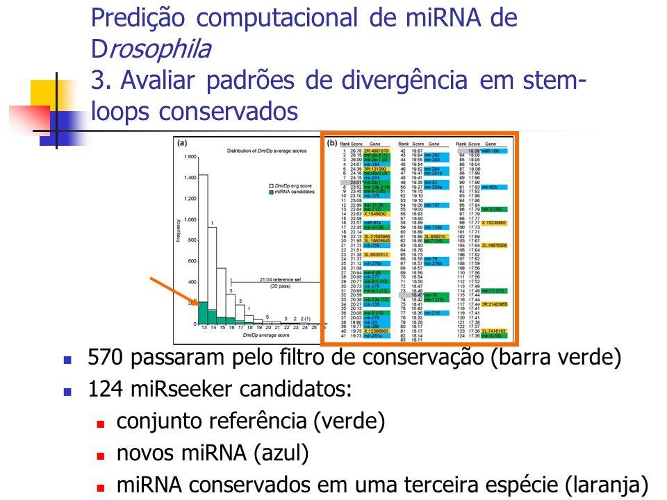 570 passaram pelo filtro de conservação (barra verde) 124 miRseeker candidatos: conjunto referência (verde) novos miRNA (azul) miRNA conservados em uma terceira espécie (laranja)