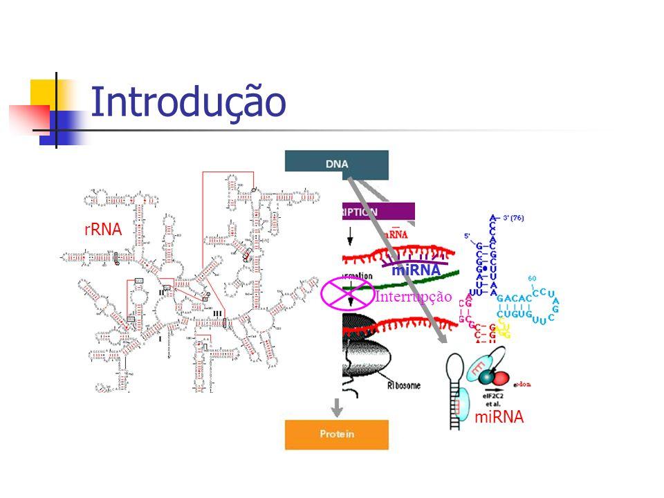 Introdução rRNA miRNA Interrupção