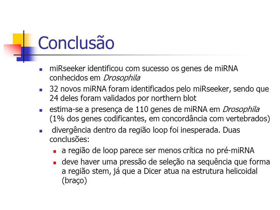 Conclusão miRseeker identificou com sucesso os genes de miRNA conhecidos em Drosophila 32 novos miRNA foram identificados pelo miRseeker, sendo que 24 deles foram validados por northern blot estima-se a presença de 110 genes de miRNA em Drosophila (1% dos genes codificantes, em concordância com vertebrados) divergência dentro da região loop foi inesperada.