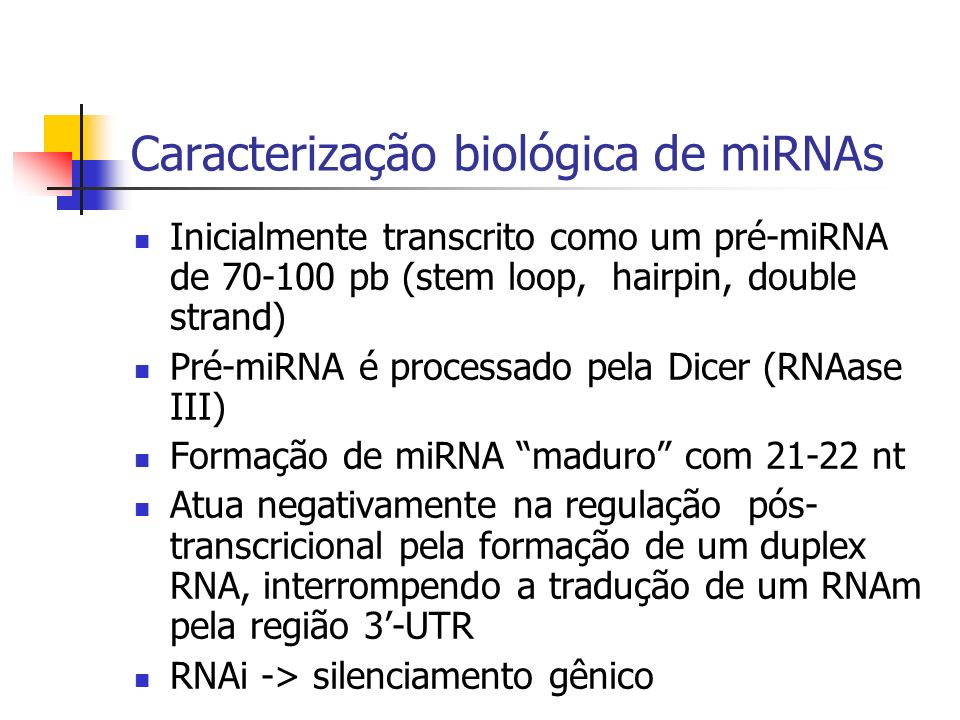 Caracterização biológica de miRNAs Inicialmente transcrito como um pré-miRNA de 70-100 pb (stem loop, hairpin, double strand) Pré-miRNA é processado pela Dicer (RNAase III) Formação de miRNA maduro com 21-22 nt Atua negativamente na regulação pós- transcricional pela formação de um duplex RNA, interrompendo a tradução de um RNAm pela região 3-UTR RNAi -> silenciamento gênico