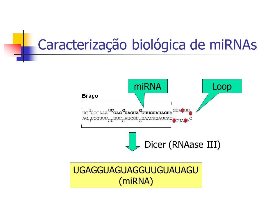 Caracterização biológica de miRNAs LoopmiRNA Dicer (RNAase III) UGAGGUAGUAGGUUGUAUAGU (miRNA)