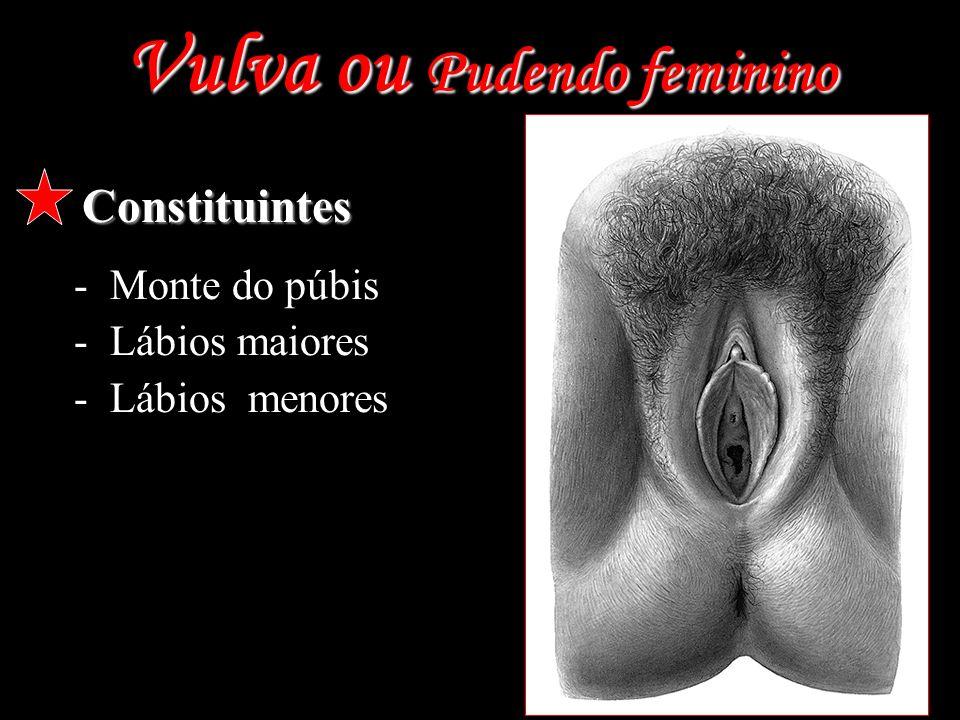 Vulva ou Pudendo feminino Constituintes -Monte do púbis -Lábios maiores -Lábios menores