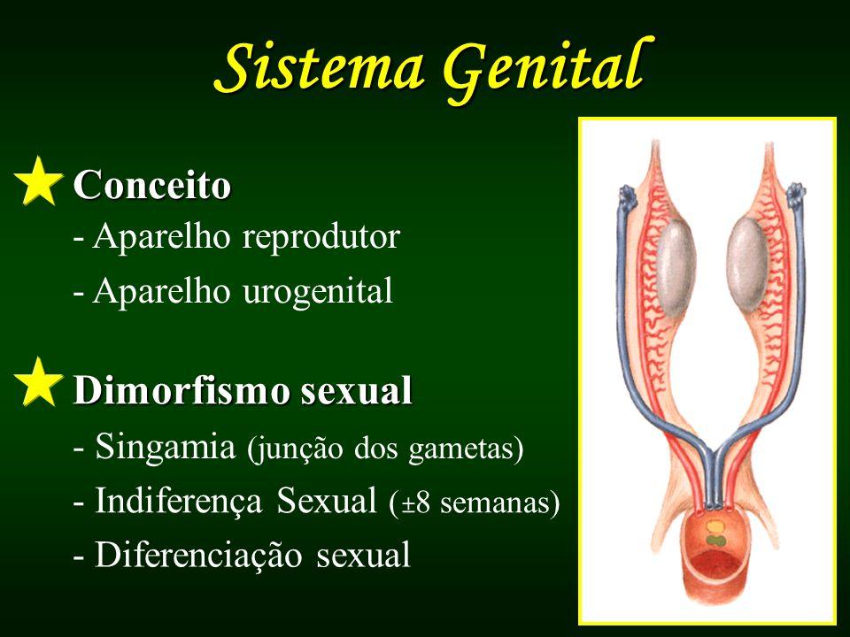 Conceito - Aparelho reprodutor - Aparelho urogenital Dimorfismo sexual - Singamia (junção dos gametas) - Indiferença Sexual ( ± 8 semanas) - Diferenci