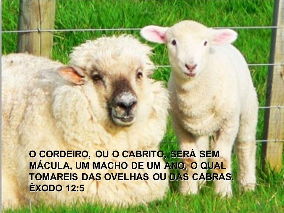 O CORDEIRO, OU O CABRITO, SERÁ SEM MÁCULA, UM MACHO DE UM ANO, O QUAL TOMAREIS DAS OVELHAS OU DAS CABRAS. ÊXODO 12:5