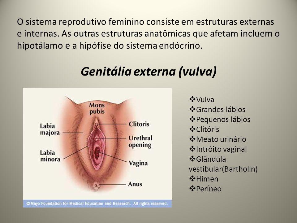 Funções das estruturas anatômicas dos órgãos genitais externos Monte de Vênus ou monte pubiano: proteger e acolchoar a sínfise púbica Grandes e pequenos lábios: proteção Clitóris: local de estimulação (altamente sensível constituído de tecido erétil) Meato uretral: por onde sai a urina Intróito vaginal: abertura externa da vagina Glândula vestibular (de Bartholin): desemboca secreção mucosa Períneo: área entre vagina e reto