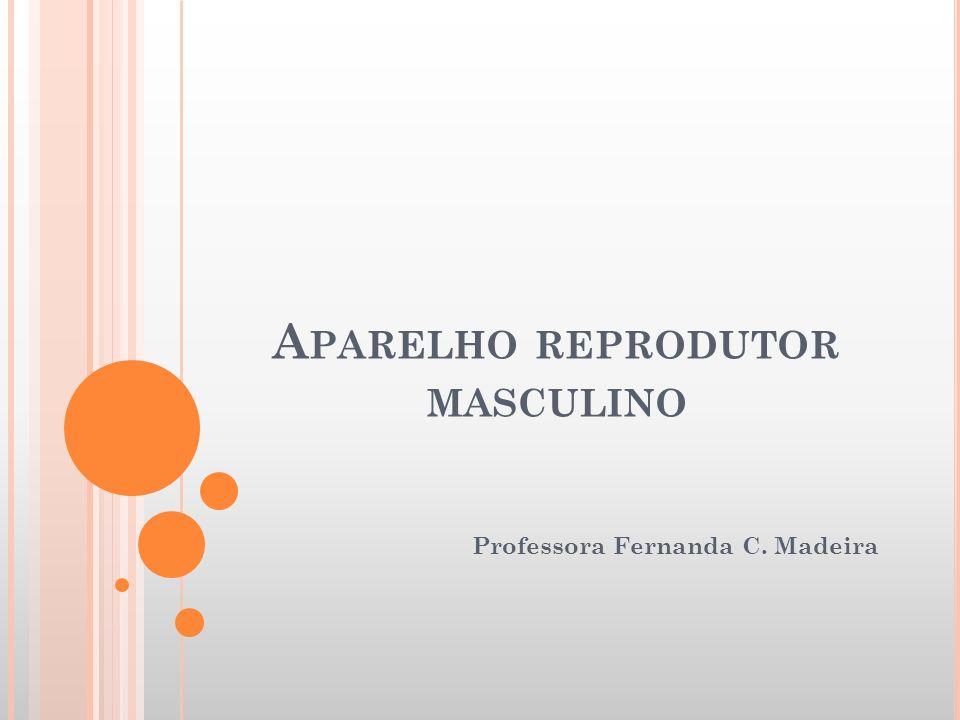 A PARELHO REPRODUTOR MASCULINO Professora Fernanda C. Madeira