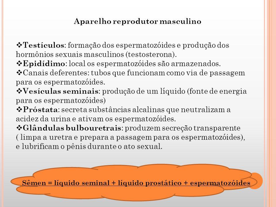 Aparelho reprodutor masculino Testículos : formação dos espermatozóides e produção dos hormônios sexuais masculinos (testosterona). Epidídimo : local