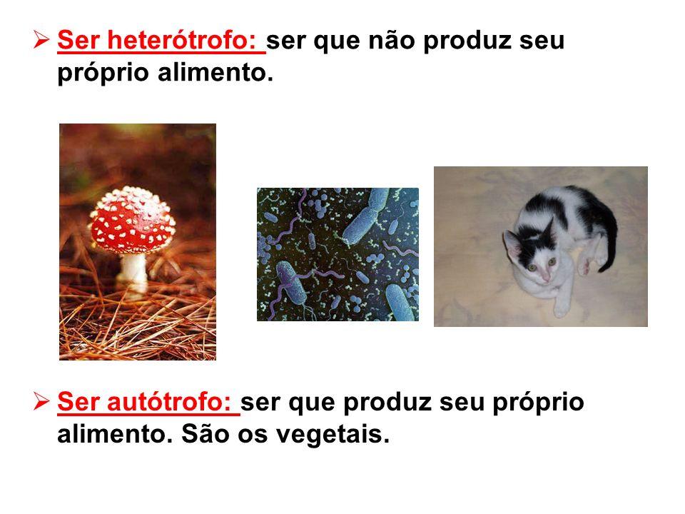 Ser heterótrofo: ser que não produz seu próprio alimento. Ser autótrofo: ser que produz seu próprio alimento. São os vegetais.
