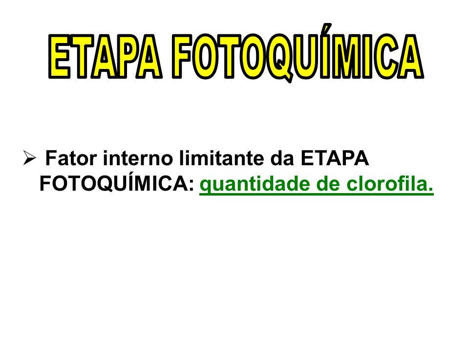 Fator interno limitante da ETAPA FOTOQUÍMICA: quantidade de clorofila.