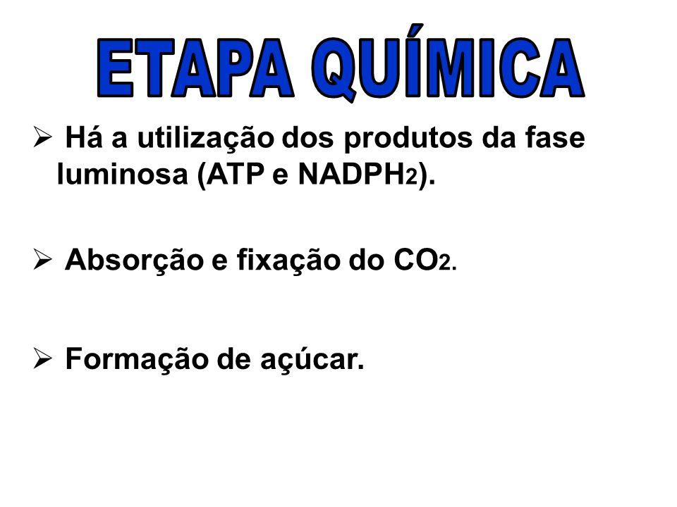Há a utilização dos produtos da fase luminosa (ATP e NADPH 2 ).