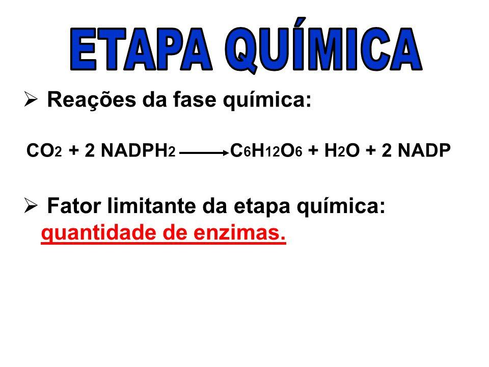 Reações da fase química: CO 2 + 2 NADPH 2 C 6 H 12 O 6 + H 2 O + 2 NADP Fator limitante da etapa química: quantidade de enzimas.