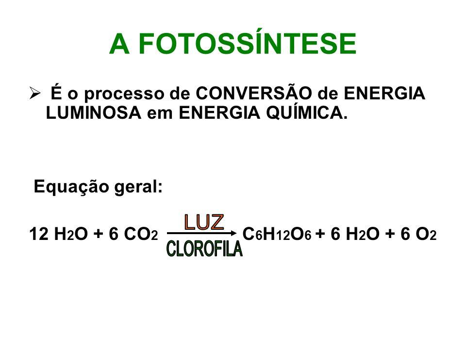 A FOTOSSÍNTESE É o processo de CONVERSÃO de ENERGIA LUMINOSA em ENERGIA QUÍMICA. Equação geral: 12 H 2 O + 6 CO 2 C 6 H 12 O 6 + 6 H 2 O + 6 O 2