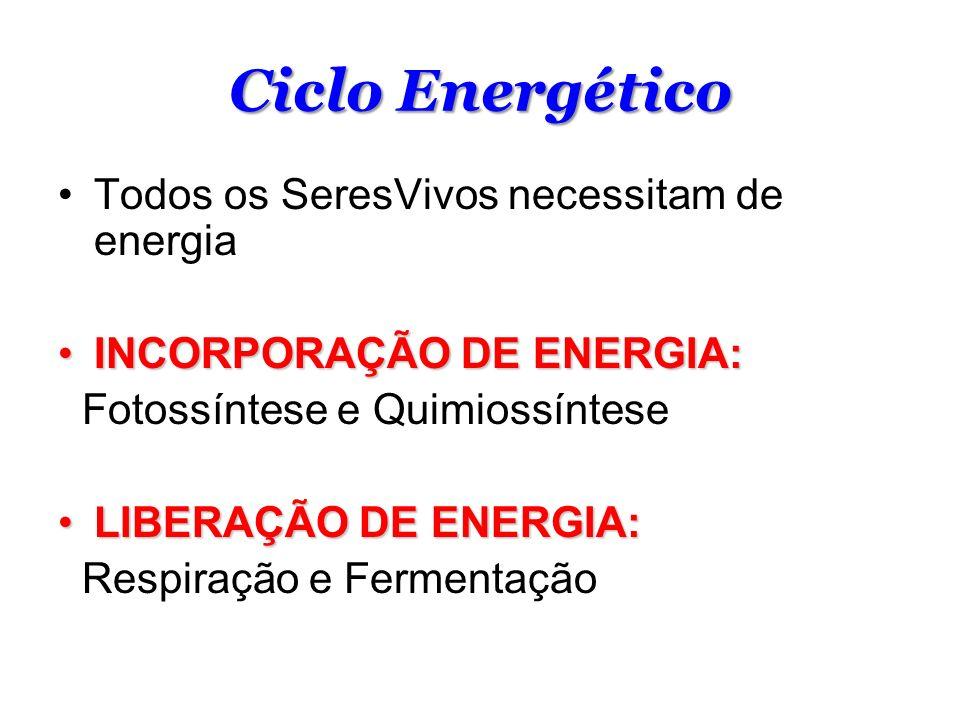 Ciclo Energético Todos os SeresVivos necessitam de energia INCORPORAÇÃO DE ENERGIA:INCORPORAÇÃO DE ENERGIA: Fotossíntese e Quimiossíntese LIBERAÇÃO DE ENERGIA:LIBERAÇÃO DE ENERGIA: Respiração e Fermentação