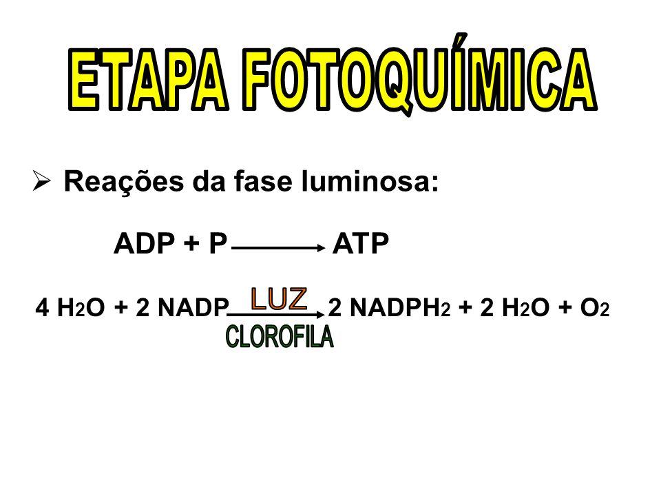 Reações da fase luminosa: ADP + P ATP 4 H 2 O + 2 NADP 2 NADPH 2 + 2 H 2 O + O 2