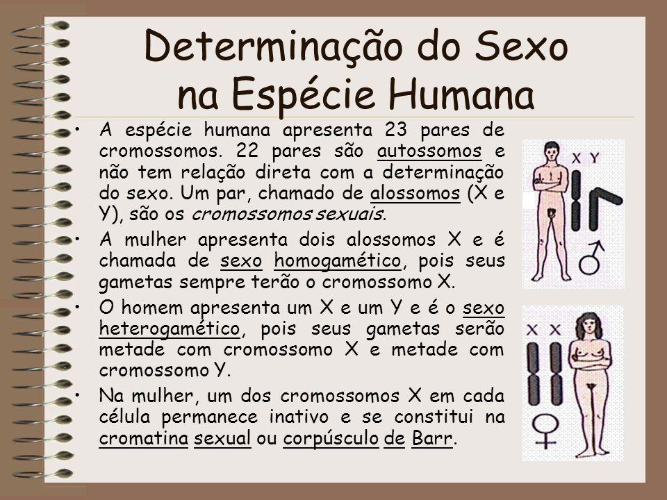Determinação do Sexo na Espécie Humana A espécie humana apresenta 23 pares de cromossomos. 22 pares são autossomos e não tem relação direta com a dete