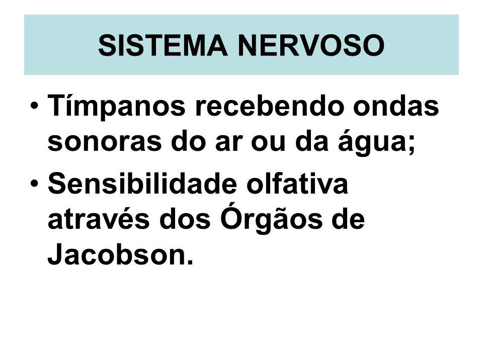 SISTEMA NERVOSO Tímpanos recebendo ondas sonoras do ar ou da água; Sensibilidade olfativa através dos Órgãos de Jacobson.