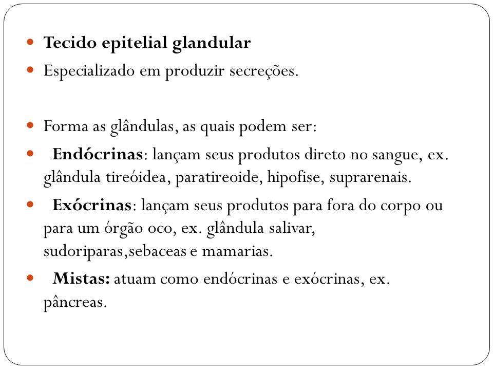Tecido epitelial glandular Especializado em produzir secreções. Forma as glândulas, as quais podem ser: Endócrinas: lançam seus produtos direto no san