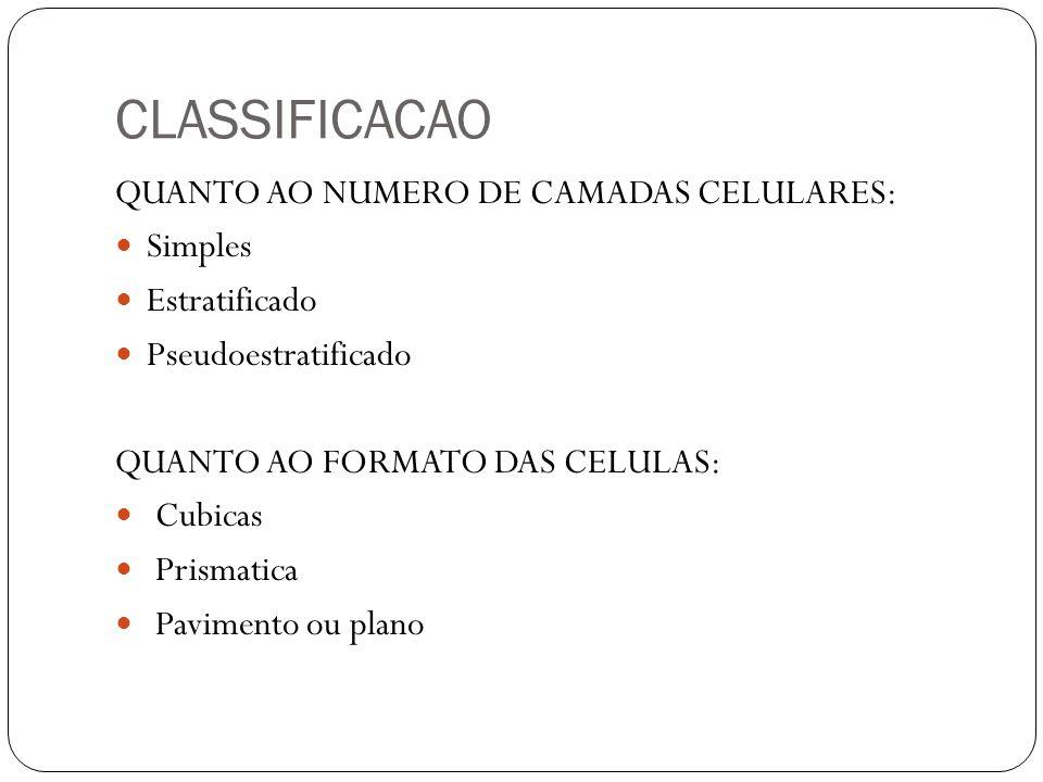 CLASSIFICACAO QUANTO AO NUMERO DE CAMADAS CELULARES: Simples Estratificado Pseudoestratificado QUANTO AO FORMATO DAS CELULAS: Cubicas Prismatica Pavim