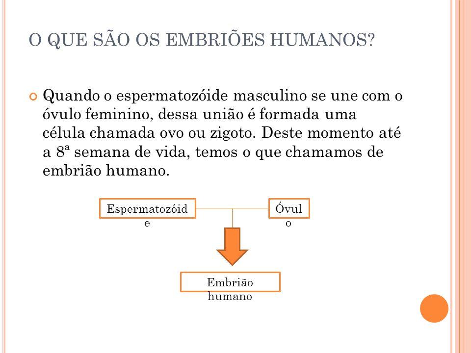 O QUE SÃO OS EMBRIÕES HUMANOS? Quando o espermatozóide masculino se une com o óvulo feminino, dessa união é formada uma célula chamada ovo ou zigoto.