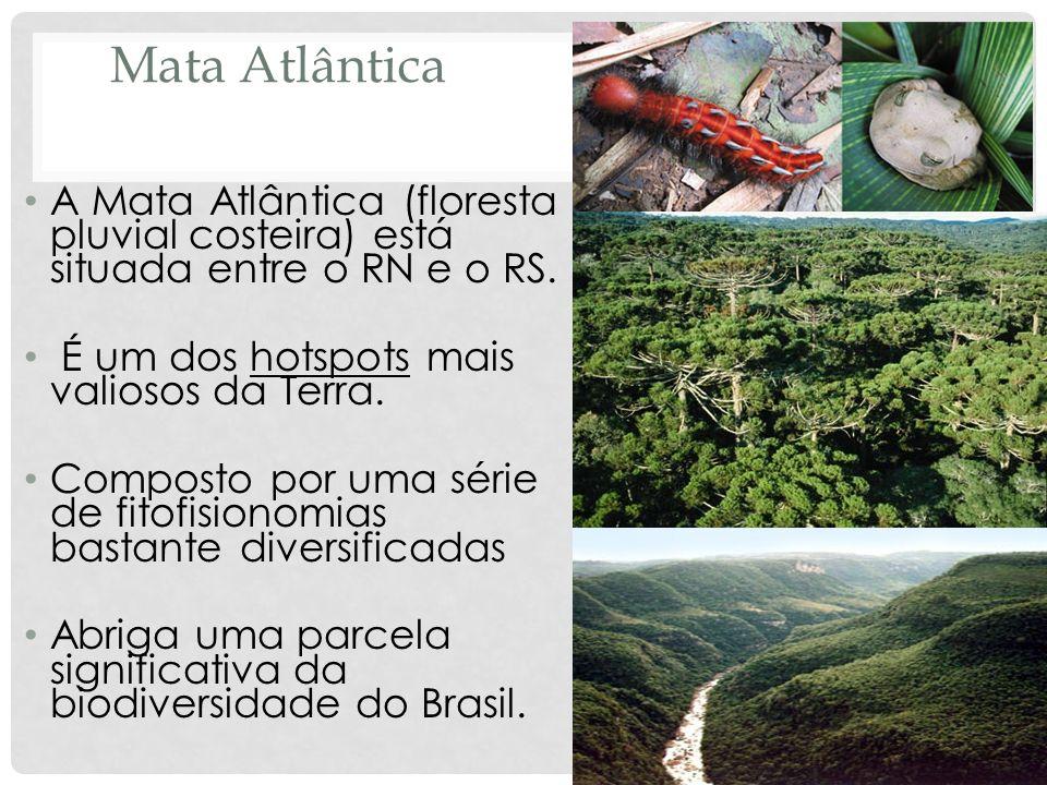 Mata Atlântica A Mata Atlântica (floresta pluvial costeira) está situada entre o RN e o RS. É um dos hotspots mais valiosos da Terra. Composto por uma