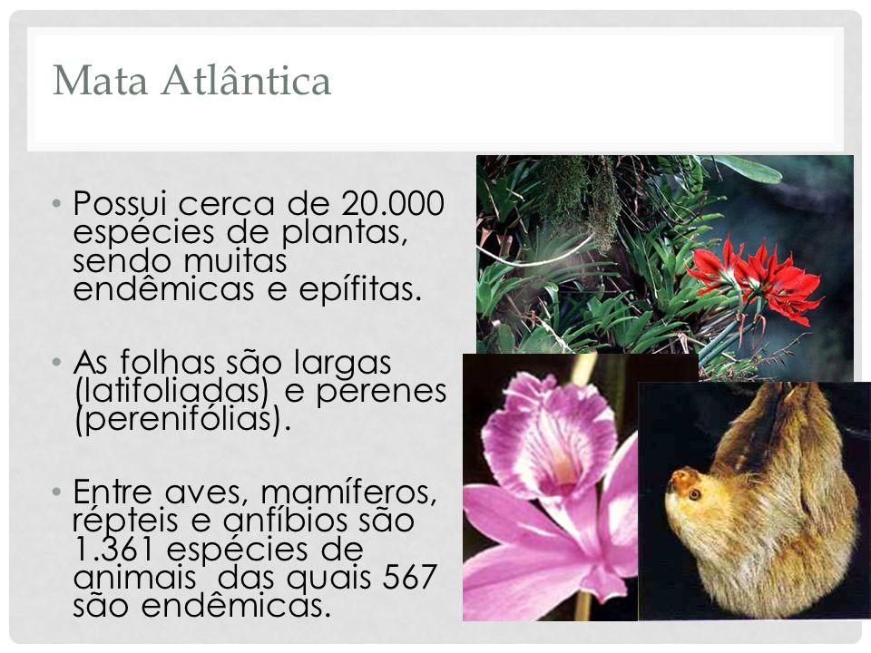 Mata Atlântica Possui cerca de 20.000 espécies de plantas, sendo muitas endêmicas e epífitas. As folhas são largas (latifoliadas) e perenes (perenifól