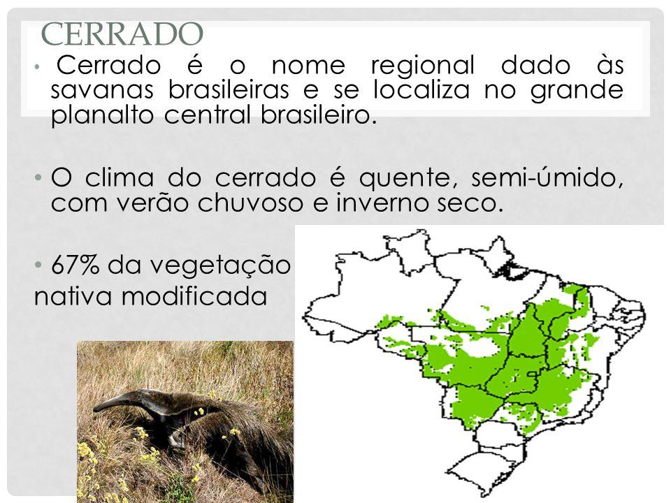 CERRADO Cerrado é o nome regional dado às savanas brasileiras e se localiza no grande planalto central brasileiro. O clima do cerrado é quente, semi-ú