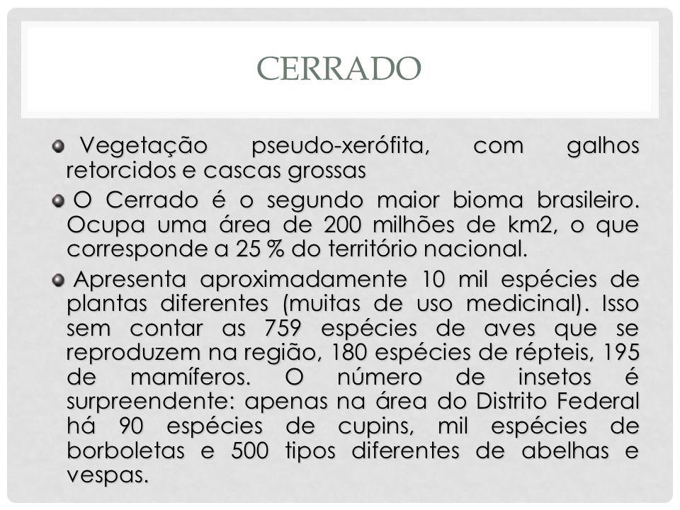 CERRADO Vegetação pseudo-xerófita, com galhos retorcidos e cascas grossas Vegetação pseudo-xerófita, com galhos retorcidos e cascas grossas O Cerrado