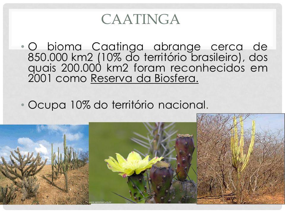 CAATINGA O bioma Caatinga abrange cerca de 850.000 km2 (10% do território brasileiro), dos quais 200.000 km2 foram reconhecidos em 2001 como Reserva d