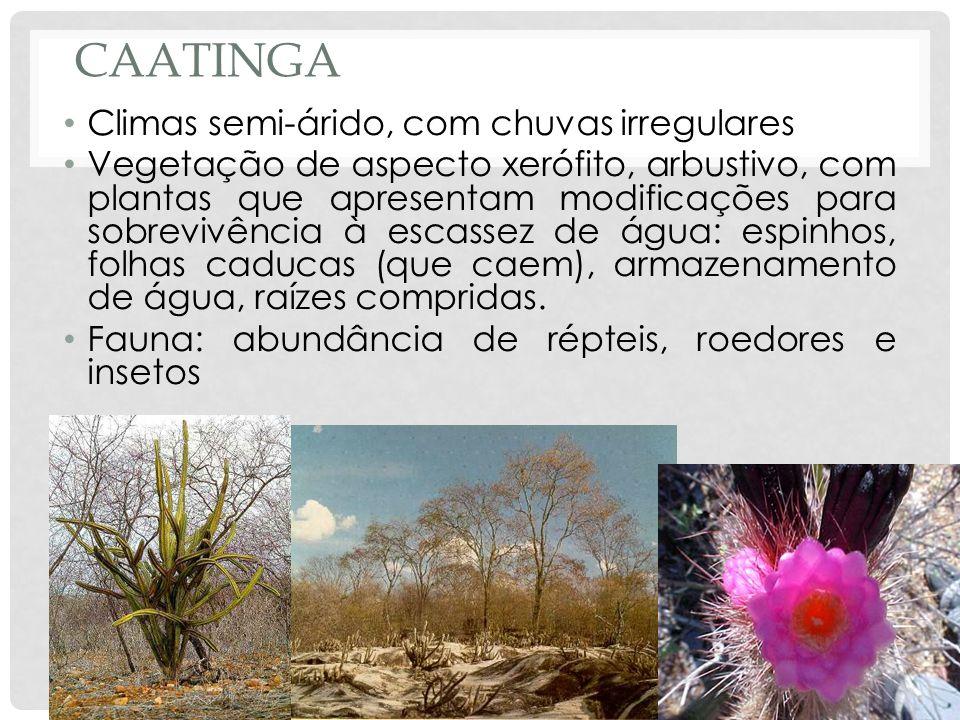 CAATINGA Climas semi-árido, com chuvas irregulares Vegetação de aspecto xerófito, arbustivo, com plantas que apresentam modificações para sobrevivênci