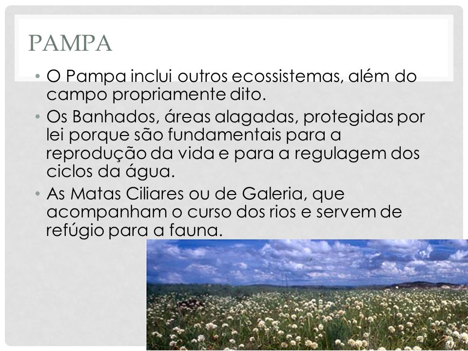 PAMPA O Pampa inclui outros ecossistemas, além do campo propriamente dito. Os Banhados, áreas alagadas, protegidas por lei porque são fundamentais par