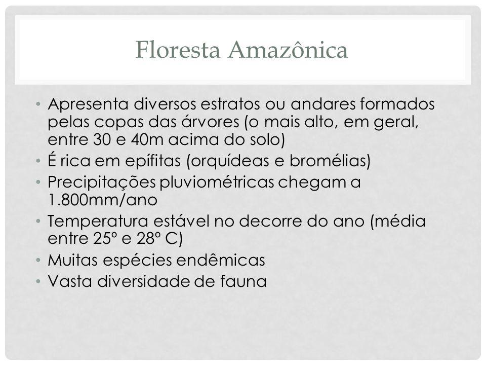 Floresta Amazônica Apresenta diversos estratos ou andares formados pelas copas das árvores (o mais alto, em geral, entre 30 e 40m acima do solo) É ric
