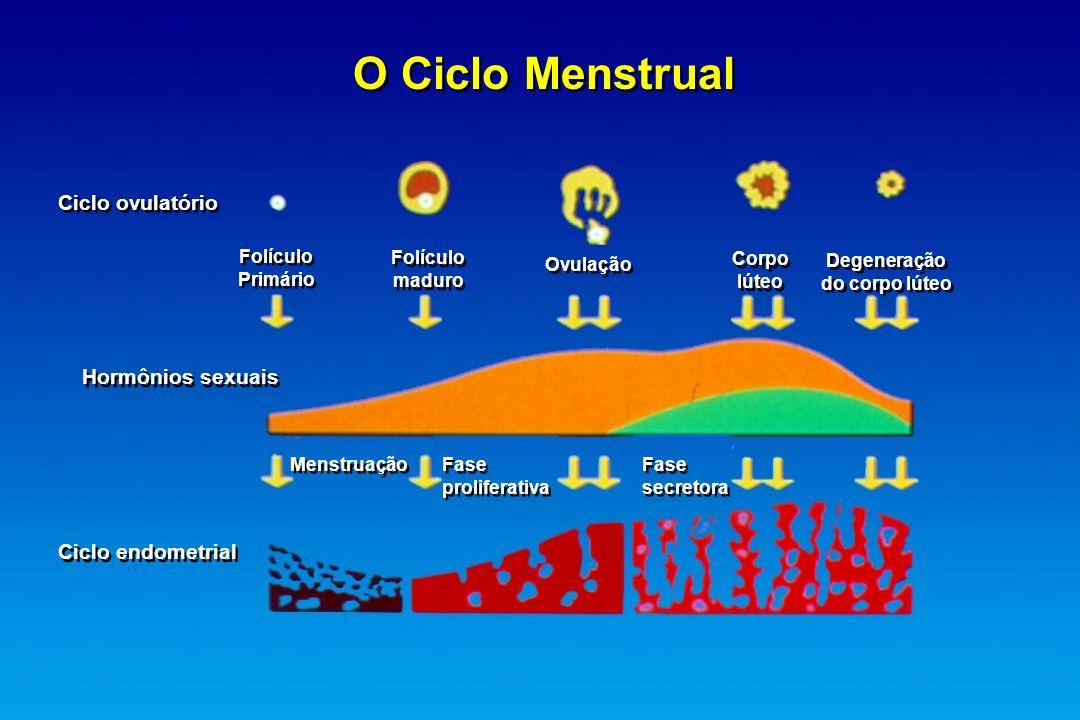 O Ciclo Menstrual Ciclo ovulatório Folículo Primário Folículo Primário Folículo maduro Folículo maduro Ovulação Corpo lúteo Corpo lúteo Degeneração do