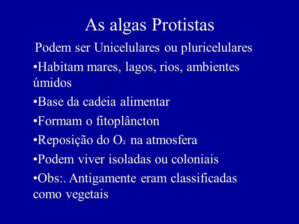 As algas Protistas Podem ser Unicelulares ou pluricelulares Habitam mares, lagos, rios, ambientes úmidos Base da cadeia alimentar Formam o fitoplâncto