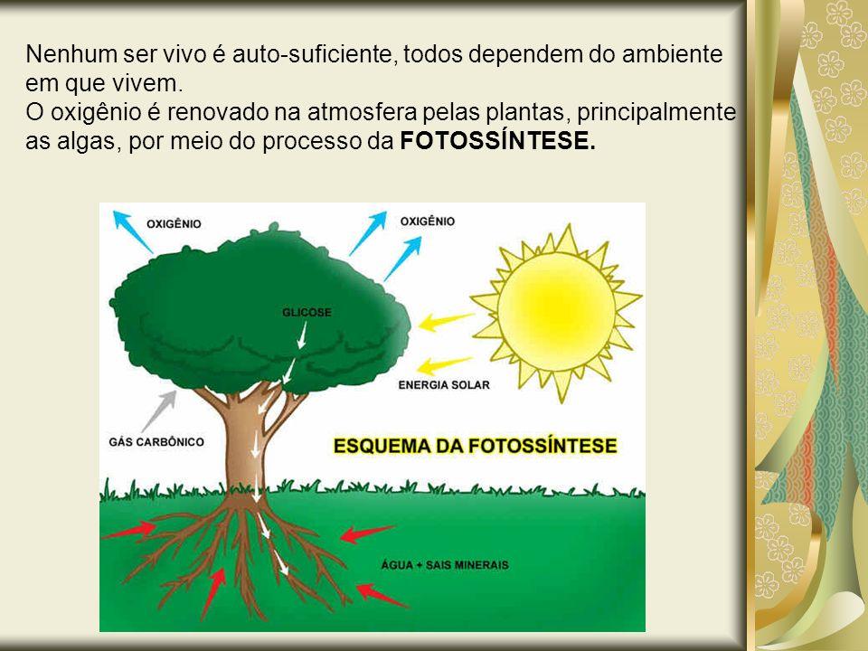 Nenhum ser vivo é auto-suficiente, todos dependem do ambiente em que vivem. O oxigênio é renovado na atmosfera pelas plantas, principalmente as algas,